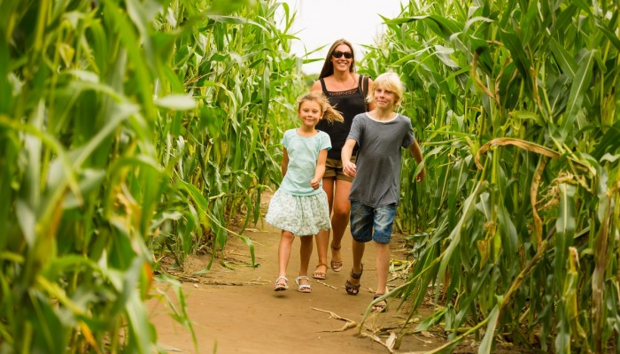 Maize Maze family landscape